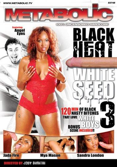 Black Heat White Seed #3