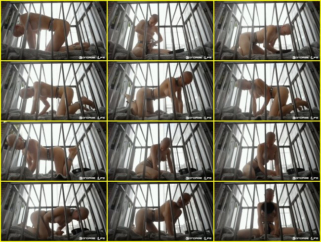 Rachel Greyhound - Cage Time & Lunch With Greyhound - 12.2.2019