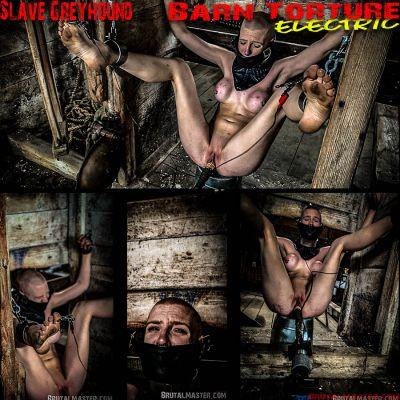 BrutalMaster – Slave Greyhound | 20 December 2019