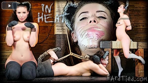 Casey Calvert - In Heat (HD 720p) Cover