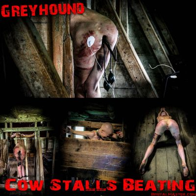 BrutalMaster – Greyhound | 18 February 2020