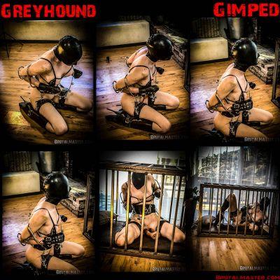 BrutalMaster – Greyhound | 30 April 2020 – Rachel Greyhound