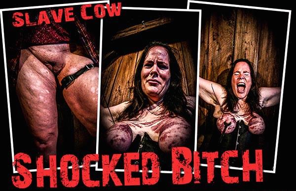 Shocked Bitch [BrutalMaster] Slave Cow (223 MB)