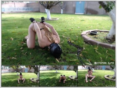 Bondage Life – By The Tree Rachel Greyhound
