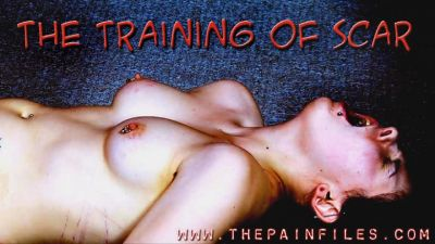 The Pain Files – The Training Of Scar