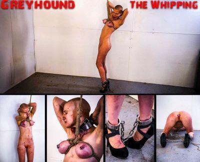 Brutal Master – BM Greyhound – The Whipping