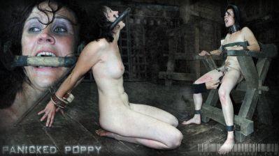 Real Time Bondage – Panicked Poppy 2 Poppy James