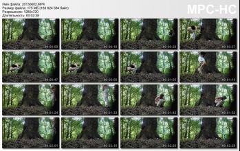 two beautiful women pissing near a tree